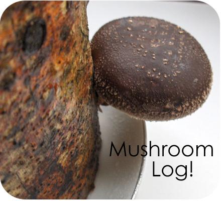 Mushroom log main image