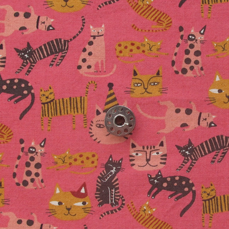 Kokka cats
